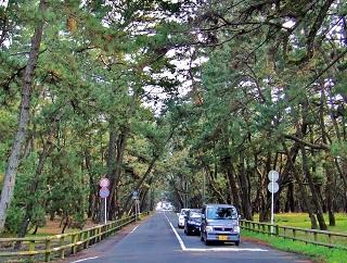 7. 日本三大松原の一つ、虹ノ松原。100万本の黒松があります
