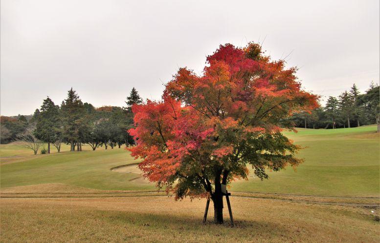 すがすがしい一日。綺麗な紅葉を眺めながら